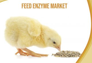 Feed Enzyme Market